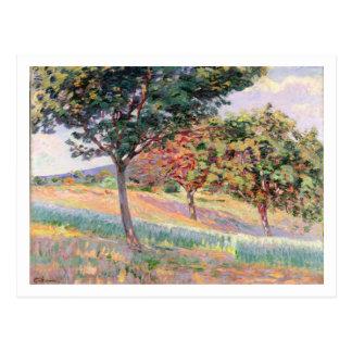 Orchard at St. Cheron, 1893 (oil on canvas) Postcard