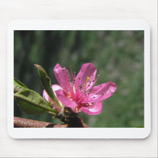 Orchard Blossom, pretty in Pink Mouse Pad