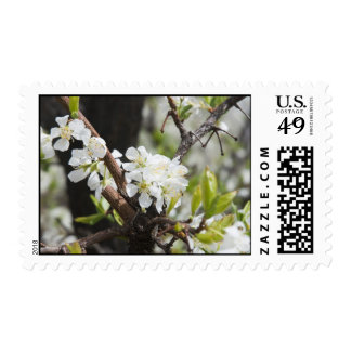 Orchard in Bloom Postage Stamp