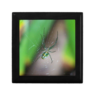Orchard Orb Weaver Spider Jewelry Box