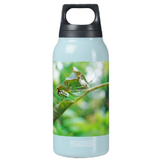 Orchard Orbweaver Spider - Leucauge venusta Insulated Water Bottle