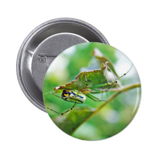 Orchard Orbweaver Spider - Leucauge venusta Pinback Button