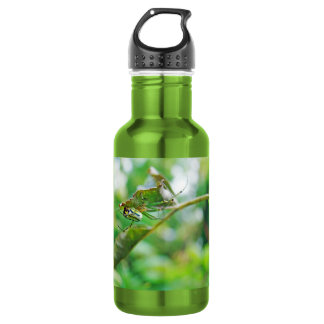 Orchard Orbweaver Spider - Leucauge venusta Stainless Steel Water Bottle