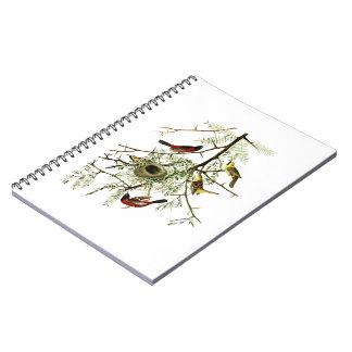 Orchard Oriole John James Audubon Birds of America Notebook