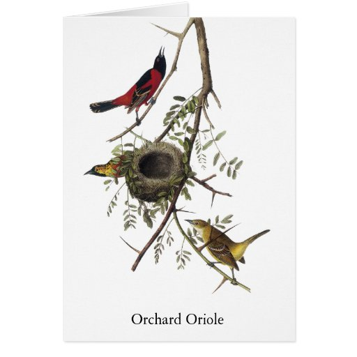 Orchard Oriole - John James Audubon Greeting Card