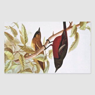 Orchard Oriole Vintage Drawing Rectangular Sticker