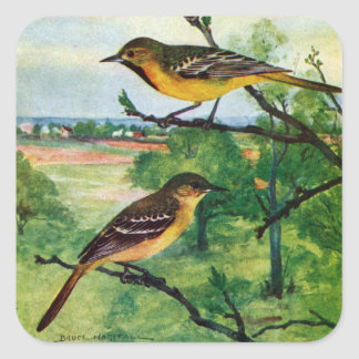Orchard Orioles Vintage Painting Square Sticker