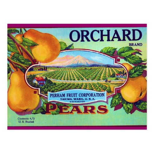Orchard Pears Post Cards