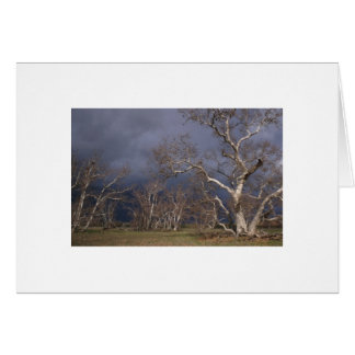 Orchard Storm Greeting Card