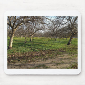 orchard trees landscape mouse pad