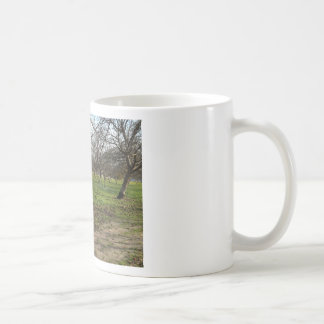orchard trees landscape classic white coffee mug