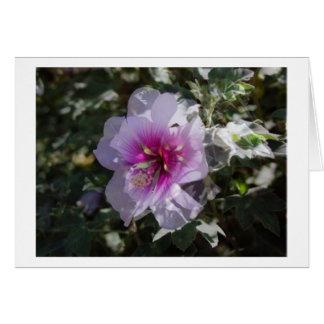 Orchard Vine Greeting Card
