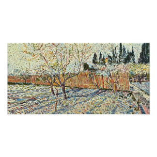 Orchard With Cypress By Vincent Van Gogh Photo Card Template