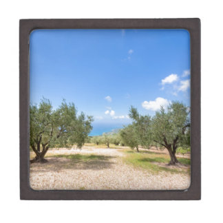 Orchard with olive trees at sea in  Greece Gift Box