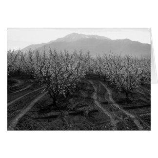 Orchards at Banning Heights, Mt. San Jacinto, 1966 Greeting Card