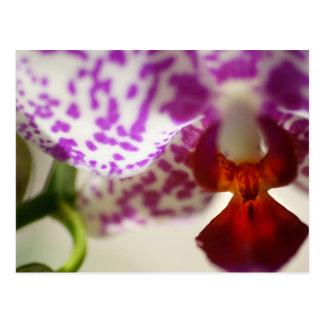 orchid2 tarjeta postal