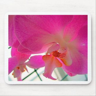 Orchid 1 mouse pad
