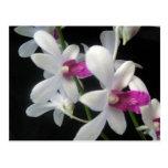 Orchid 1 postcard
