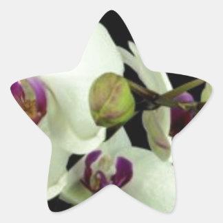 orchid 7.jpg star sticker