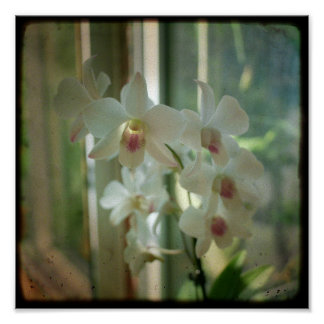 orchid 8 x 8 original Nature TTV photograph Poster