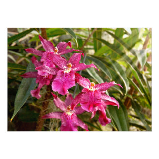 Orchid - A pleasant surprise Personalized Invitations