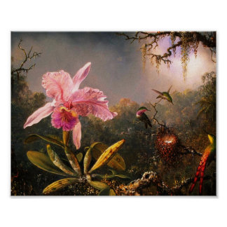 Orchid and Three Brazilian Hummingbirds2 Posters
