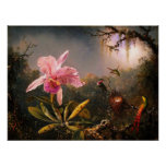 Orchid and Three Brazilian Hummingbirds Poster