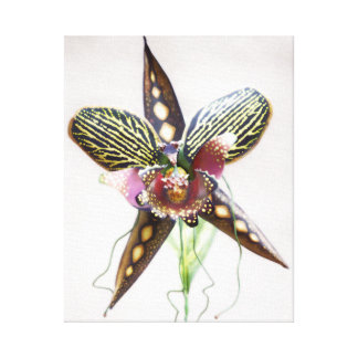 Orchid Art, Rattlesnake Spider Orchid Canvas Print