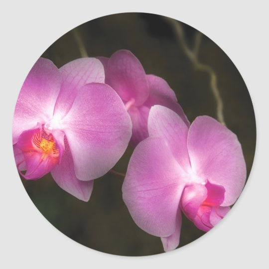 Orchid - Better in a set Classic Round Sticker
