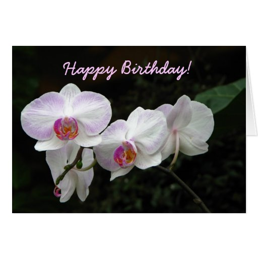 Orchid birthday greeting card zazzle