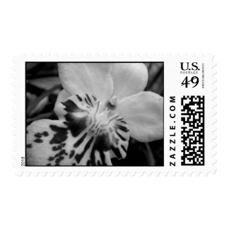 Orchid (Black&White) Stamp