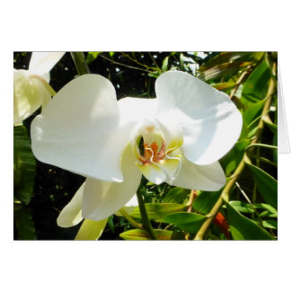 Orchid - Blank Card