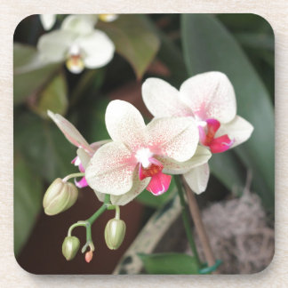 Orchid blooms beverage coasters