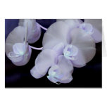 orchid blooms cards