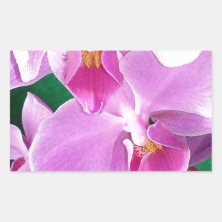 Orchid blooms closeup in pink rectangular sticker
