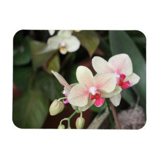 Orchid blooms flexible magnet