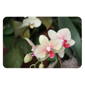Orchid blooms rectangular magnet