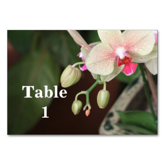 Orchid Blooms Table Cards