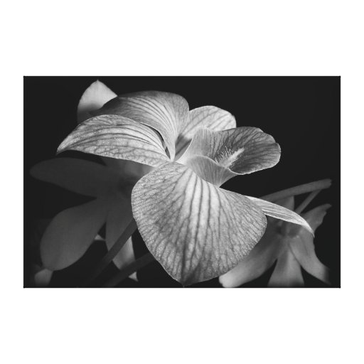 Orchid Blossom in Black & White Canvas Print (A)