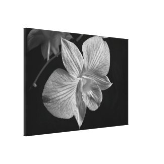 Orchid Blossom in Black & White Canvas Print (B) wrappedcanvas