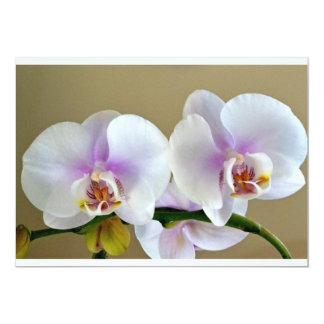 Orchid Blossom invitation card