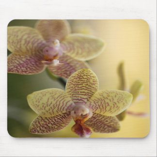 Orchid Blossom Mouse Mat