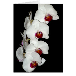 Orchid Blossoms Greeting Card