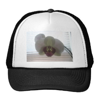 Orchid Blossoms Pink Destiny Gardens Trucker Hat
