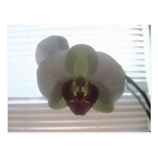 Orchid Blossoms Pink Destiny Gardens Postcard