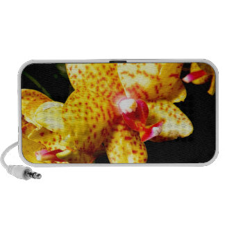 Orchid Blossoms Wedding Blossoms Portable Speakers