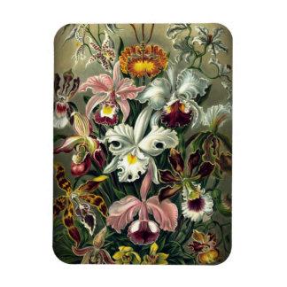 Orchid Botanical Print Magnet