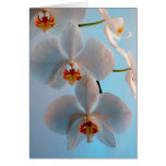 Orchid Branch Cards
