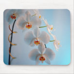 Orchid Branch Mouse Pad