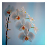 Orchid Branch Print